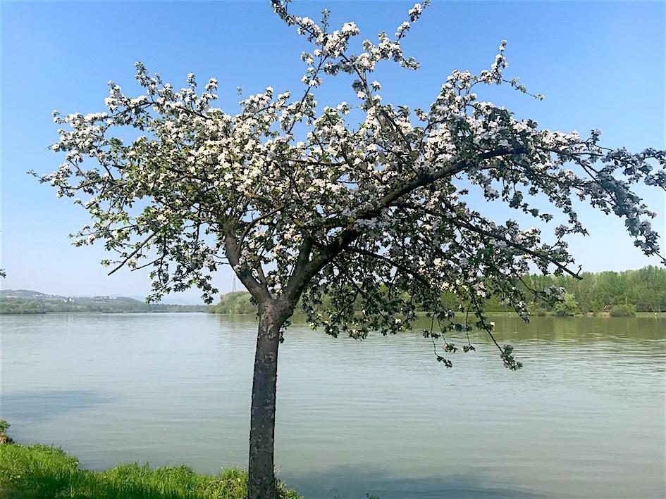 Frühling beim PortoVelo